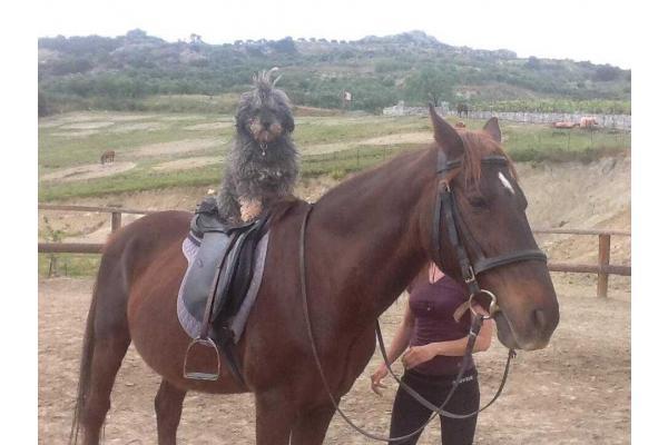 My Horse αγρόκτημα - 3