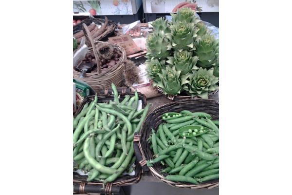 Λαχανόκηπος - 9