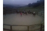 My Horse αγρόκτημα - 5