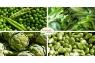 Λαχανόκηπος - 13
